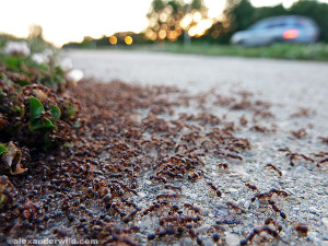 Premier Columbus Bed Bug Exterminators